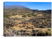 Landscape in the Teide National Park, Tenerife, Canvas Print