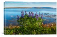 Lupins by the Fjord, Canvas Print