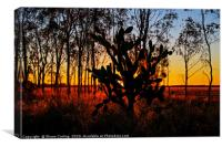 Prickly Pear Sunset, Canvas Print