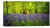 Bluebells at Lawton , Canvas Print