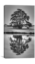 Reflections Tree, Canvas Print