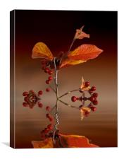 Autumn leafs and red berries, Canvas Print