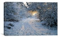 Sunrise at Ditchling Common in the snow, Canvas Print