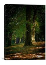 Toned Buxton Trees, Canvas Print