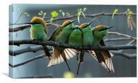 Green Bee Eater......, Canvas Print