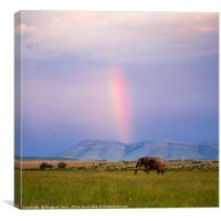 Rainbow.....beyond horizon..., Canvas Print