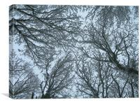 Snow-filled Skywards View , Canvas Print