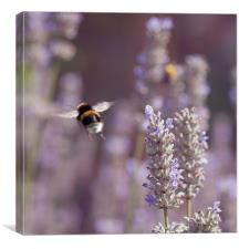 Bumble Bee In flight, Canvas Print
