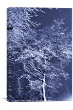 Hoary branches, Canvas Print