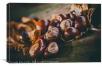 Conkers on a log, Canvas Print