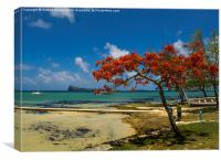 The Flame Tree of Mauritius, Canvas Print
