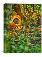 Wood Mouse In a Pumpkin , Canvas Print