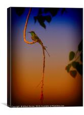The Indian Bee Eater, Canvas Print