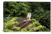 Cat On An Old Thin Roof, Canvas Print
