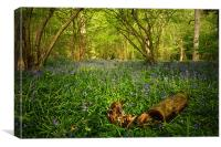 Bluebells in a  Leicestershire Woodland, Canvas Print