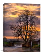 The Tree on the Weir, Canvas Print