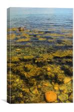 Seaweed and Stones, Canvas Print