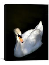 Swan In Relief, Canvas Print