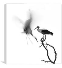 A couple of Storks, Canvas Print