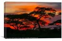Red African Sunset, Canvas Print