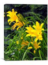 Yellow Lilies, Canvas Print