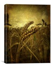 Wheat Field, Canvas Print