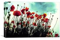 poppies in hot summer, Canvas Print