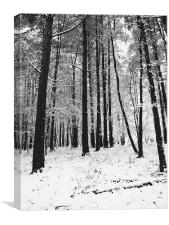 Woodland Snow, Canvas Print