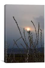 Willow buds in twilight, Canvas Print