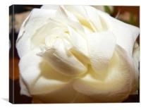 First rose from him..., Canvas Print