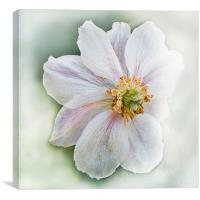 Frost Flower, Canvas Print