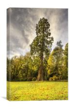 Tall Tree, Canvas Print