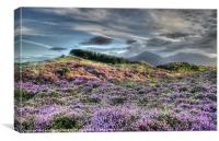 Mourne Heather, Canvas Print