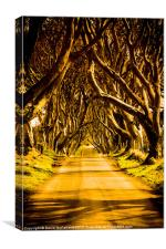 The Dark Hedges of Antrim, Canvas Print