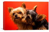Yorkie love, Canvas Print