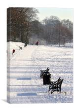 Resting place in Lurgan Park, Canvas Print