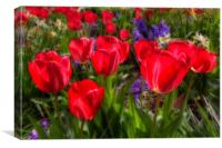 Tulips in Bloom, Canvas Print