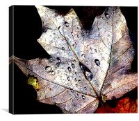 Maple Leaf Afloat , Canvas Print