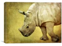 Baby Rhinoceros, Canvas Print