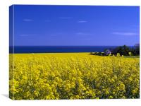 Hidden In The Rape Seed., Canvas Print