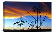 Shell Bay Silhouettes, Scotland., Canvas Print