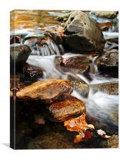Dream A Little Stream With Me #2, Canvas Print