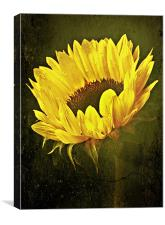 Petals Of A Sunflower., Canvas Print