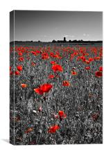 Poppy view, Canvas Print