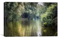 Up the River Ant, Canvas Print