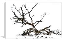 Bare and twisted, Canvas Print