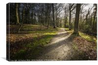 Woodland Walk at Fairhaven, Canvas Print