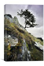 Tree on the rockface, Canvas Print