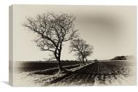 Bare trees in Norfolk, Canvas Print