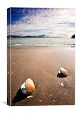 Two Shells, Canvas Print